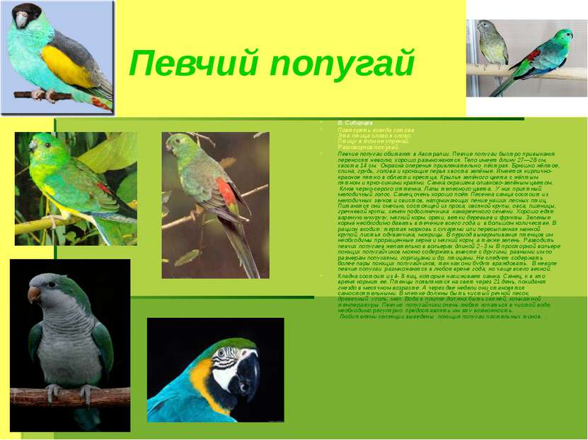 Певчий попугай В. Сибирцев Повторять всегда готова Эта птица слово в слово. П...