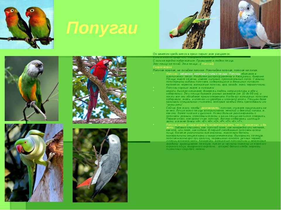Попугаи Он заметен среди веток в ярких перьях всех расцветок. Если в клетке п...