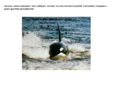 Касатку также называют «кит-убийца», потому что они питаются рыбой, тюленями,...