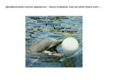 Дельфинов можно научить здороваться – махать плавником. Ещё они умеют играть ...