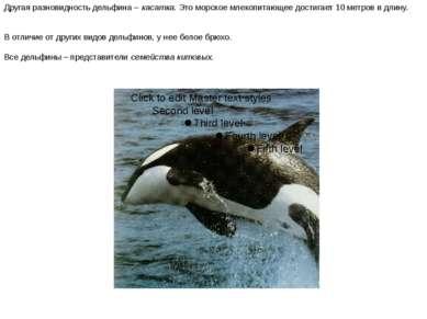 Другая разновидность дельфина – касатка. Это морское млекопитающее достигает ...