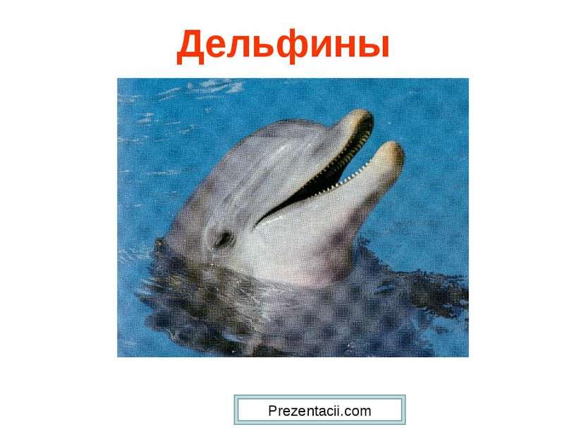 Дельфины Prezentacii.com