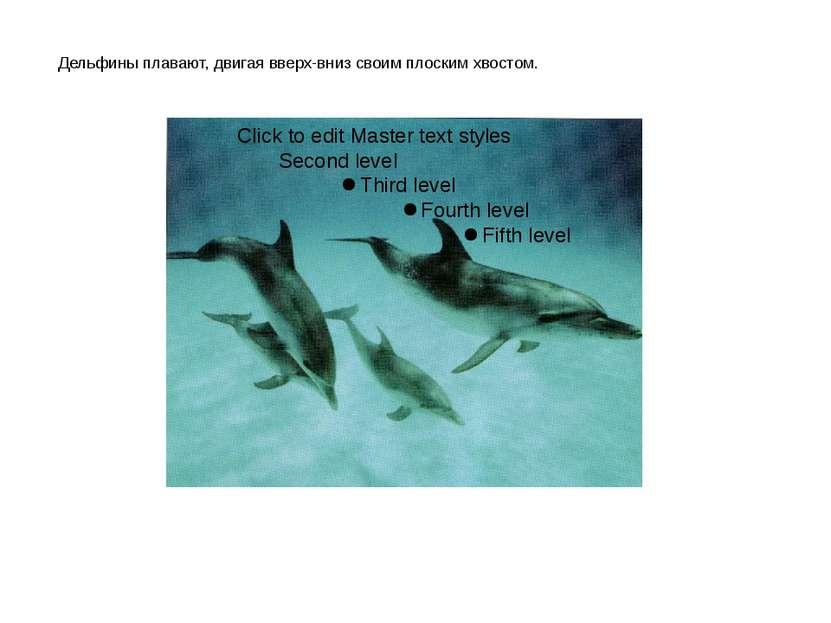 Дельфины плавают, двигая вверх-вниз своим плоским хвостом.