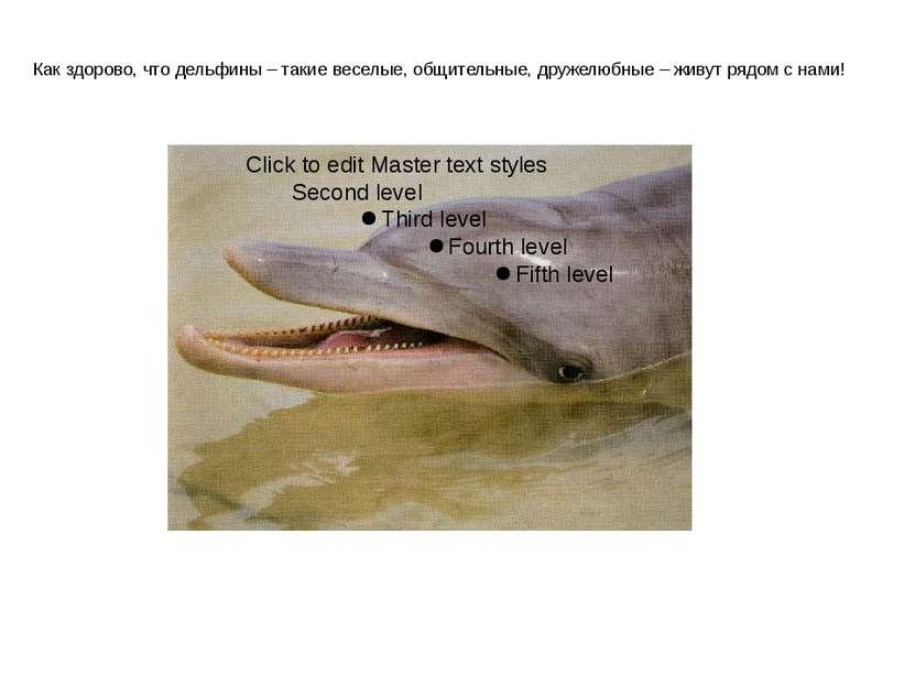 Как здорово, что дельфины – такие веселые, общительные, дружелюбные – живут р...