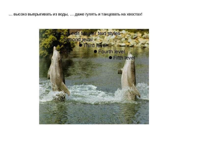 … высоко выпрыгивать из воды, … даже гулять и танцевать на хвостах!