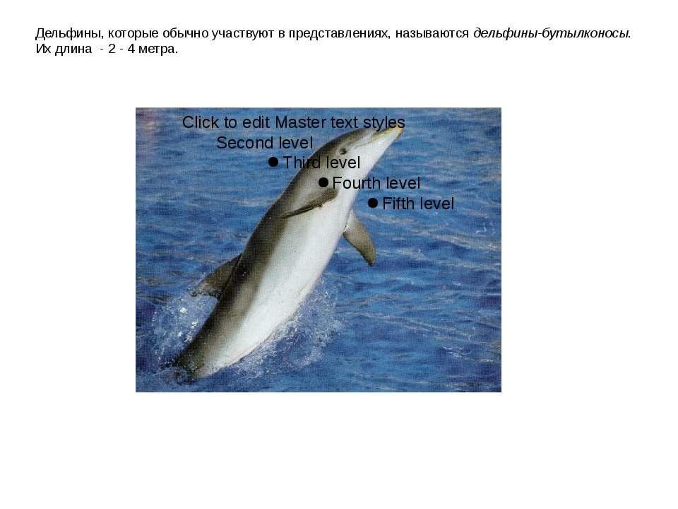 Дельфины, которые обычно участвуют в представлениях, называются дельфины-буты...