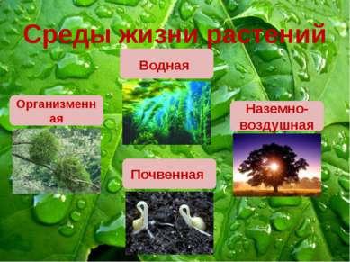 Среды жизни растений Наземно-воздушная Почвенная Организменная Водная