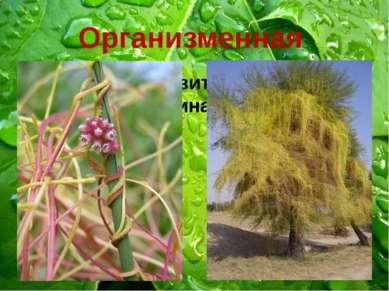 Организменная Растение-паразит зависит от растения-хозяина