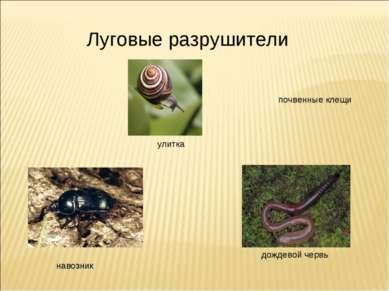 Луговые разрушители навозник дождевой червь улитка почвенные клещи