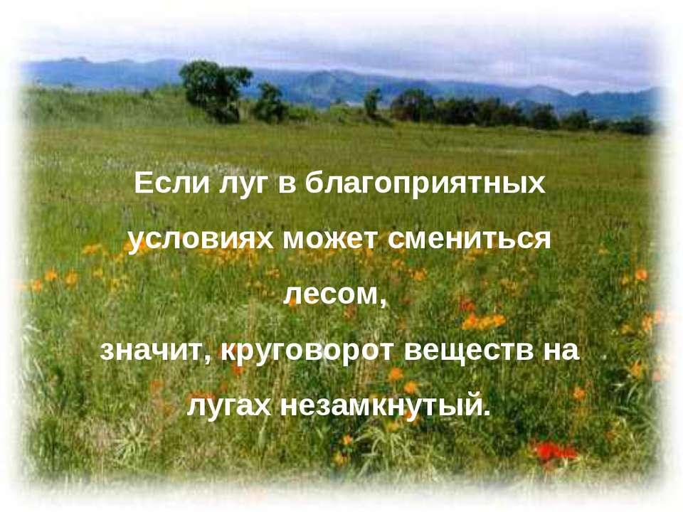 Если луг в благоприятных условиях может смениться лесом, значит, круговорот в...