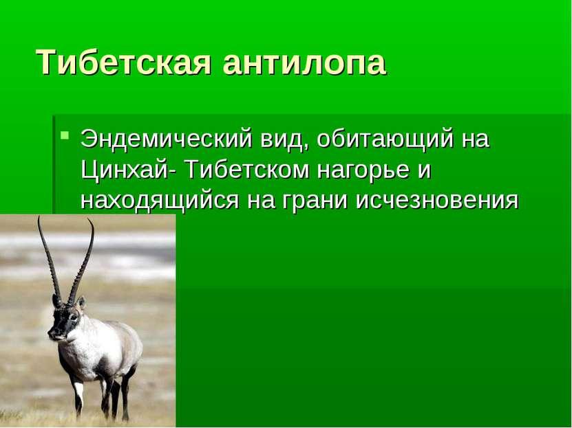 Тибетская антилопа Эндемический вид, обитающий на Цинхай- Тибетском нагорье и...