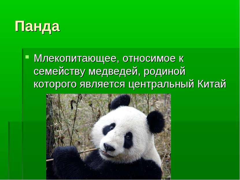Панда Млекопитающее, относимое к семейству медведей, родиной которого являетс...