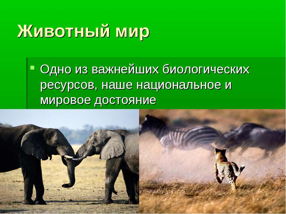 Животный мир Одно из важнейших биологических ресурсов, наше национальное и ми...