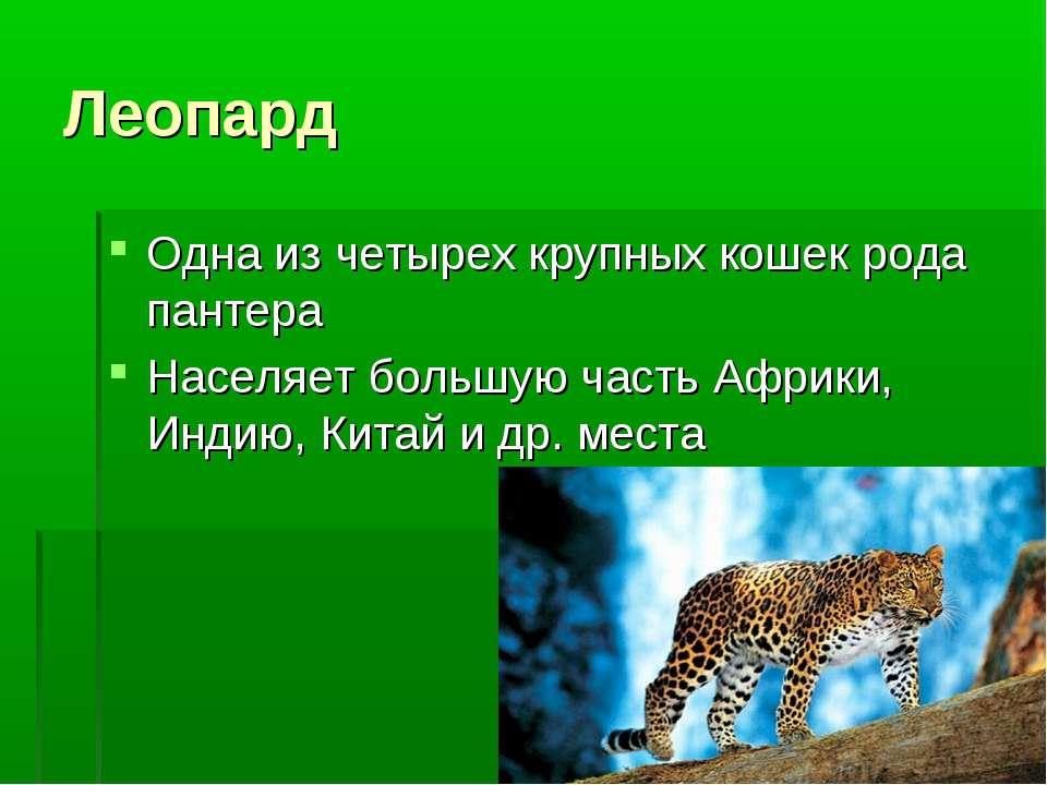 Леопард Одна из четырех крупных кошек рода пантера Населяет большую часть Афр...