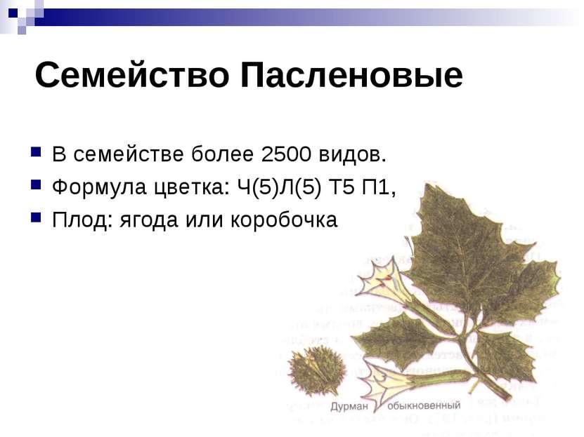 Семейство Пасленовые В семействе более 2500 видов. Формула цветка: Ч(5)Л(5) Т...