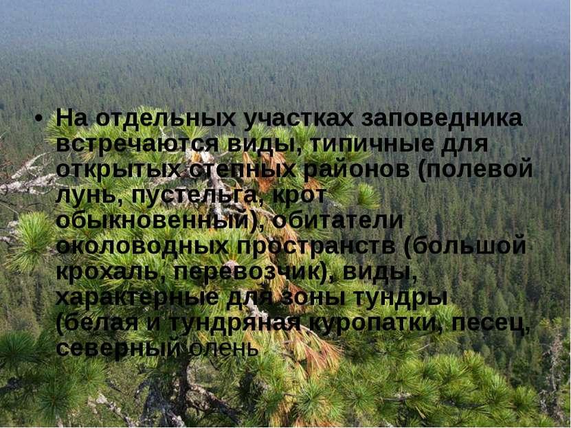 На отдельных участках заповедника встречаются виды, типичные для открытых сте...