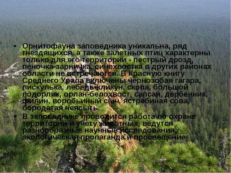 Орнитофауна заповедника уникальна, ряд гнездящихся, а также залетных птиц хар...