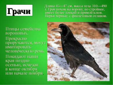 Длина 45—47см, масса тела 310—490 г. Грач похож на ворону, но стройнее, имее...