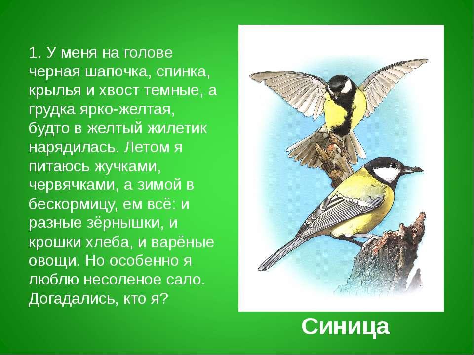 1. У меня на голове черная шапочка, спинка, крылья и хвост темные, а грудка я...