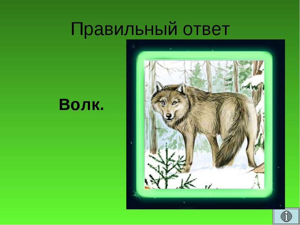 Правильный ответ Волк.