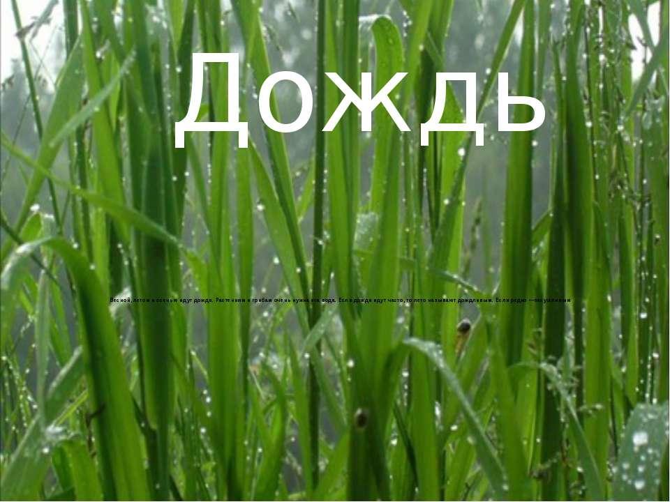 Весной, летом и осенью идут дожди. Растениям и грибам очень нужна эта вода. Е...