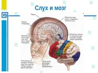 Слух и мозг