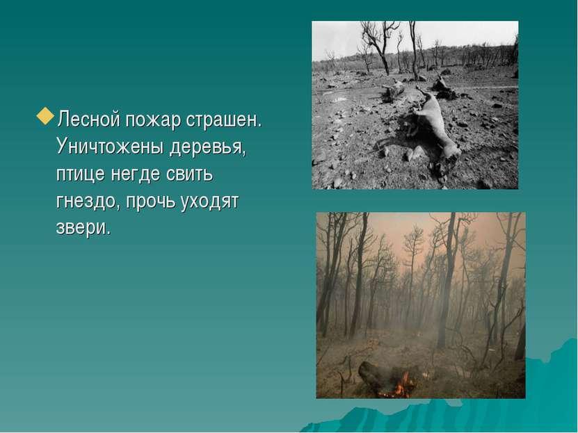 Лесной пожар страшен. Уничтожены деревья, птице негде свить гнездо, прочь ухо...
