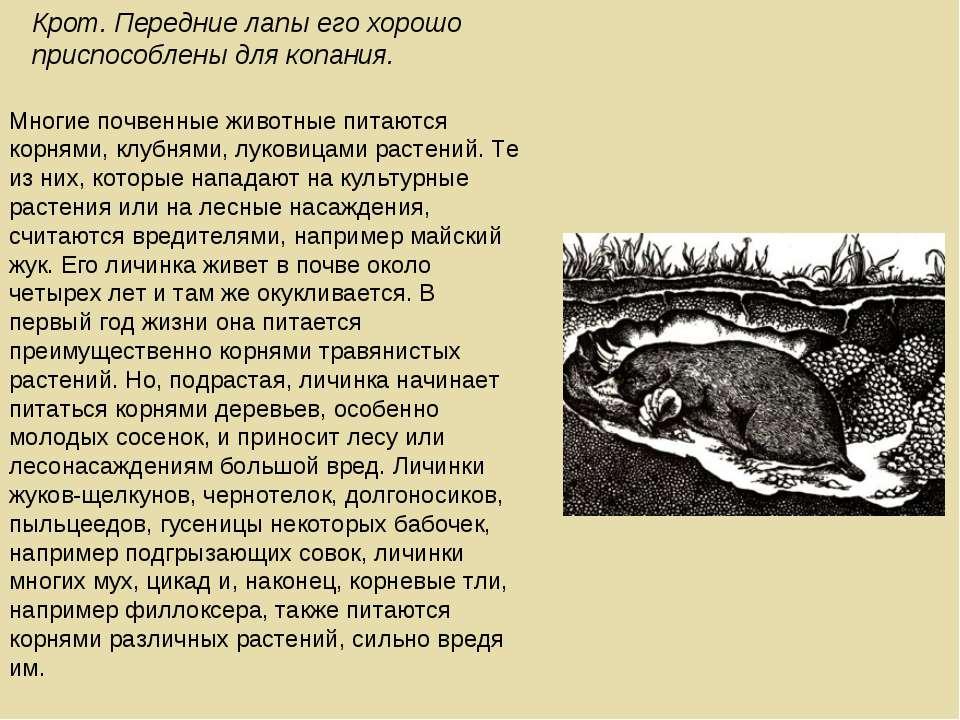 Многие почвенные животные питаются корнями, клубнями, луковицами растений. Те...