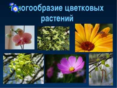 Многообразие цветковых растений