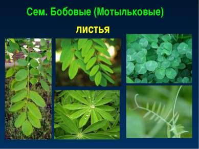 Сем. Бобовые (Мотыльковые) листья