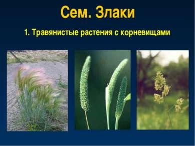 Сем. Злаки 1. Травянистые растения с корневищами
