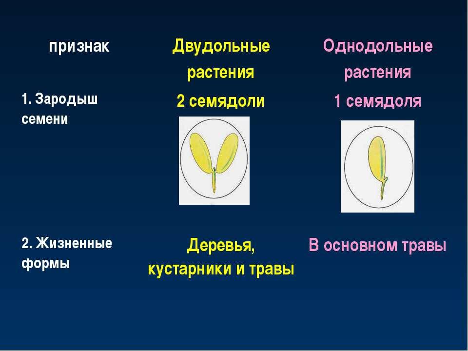 признак Двудольные растения Однодольные растения 1. Зародыш семени 2 семядоли...