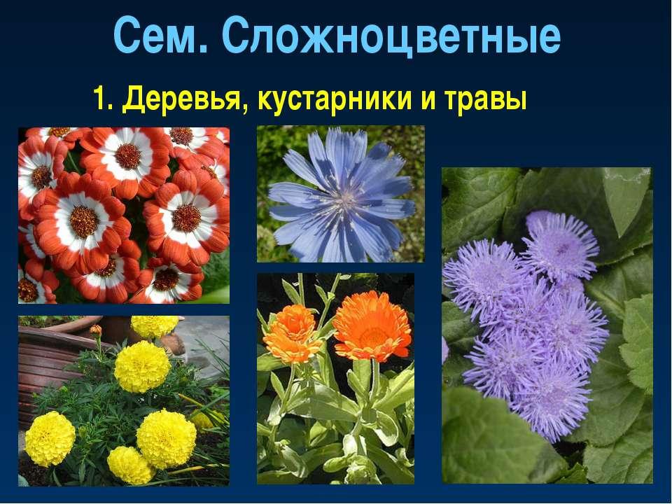 Сем. Сложноцветные 1. Деревья, кустарники и травы