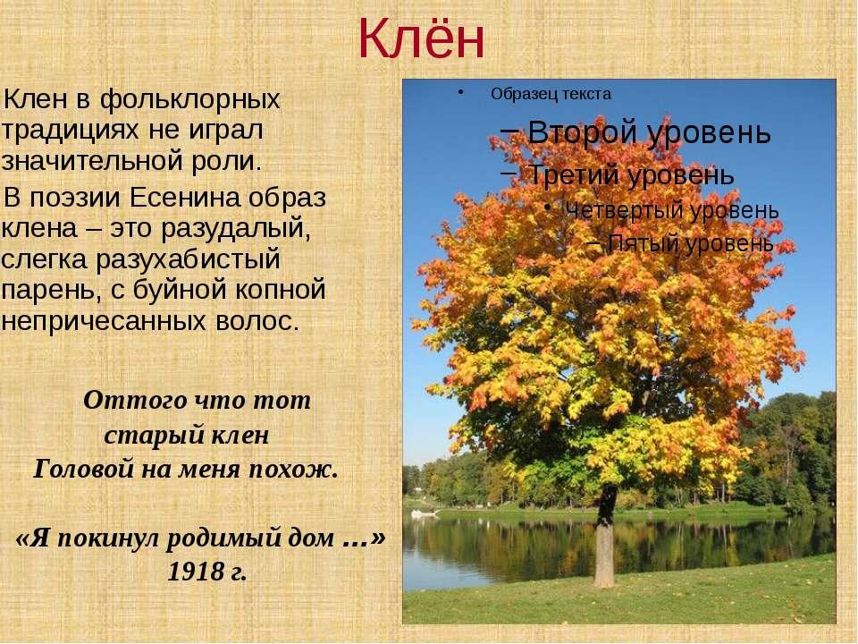 Клён Клен в фольклорных традициях не играл значительной роли. В поэзии Есенин...
