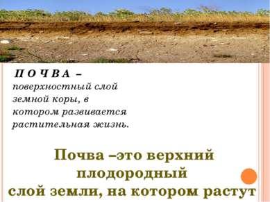 П О Ч В А – поверхностный слой земной коры, в котором развивается растительна...