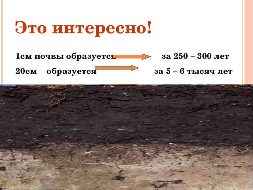Это интересно! 1см почвы образуется за 250 – 300 лет 20см образуется за 5 – 6...