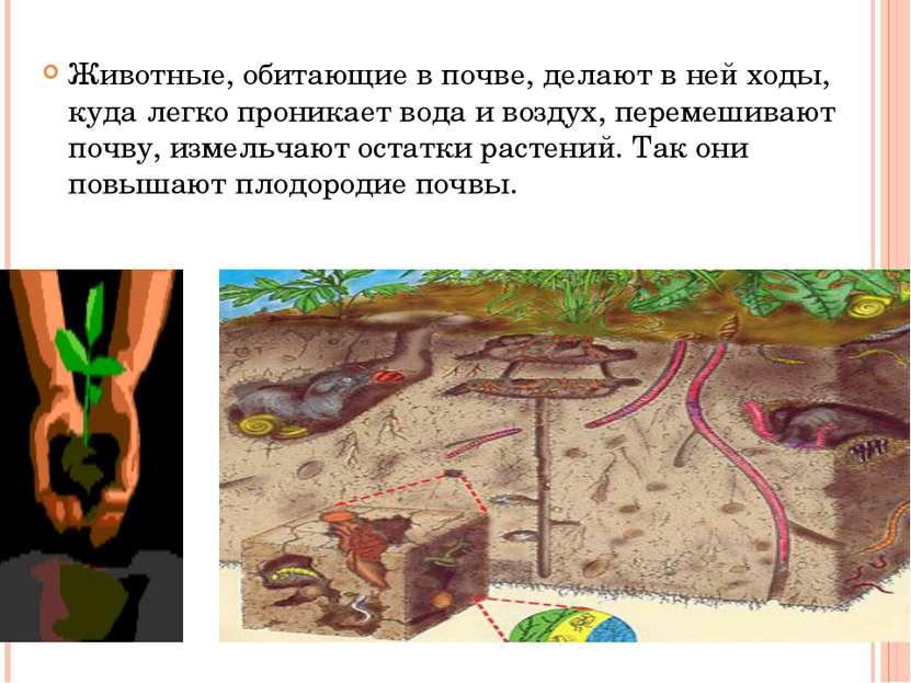 Животные, обитающие в почве, делают в ней ходы, куда легко проникает вода и в...