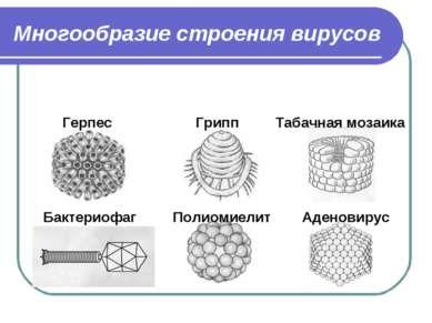 Многообразие строения вирусов Герпес Грипп Табачная мозаика Бактериофаг Полио...