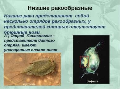 Низшие ракообразные Низшие раки представляют собой несколько отрядов ракообра...