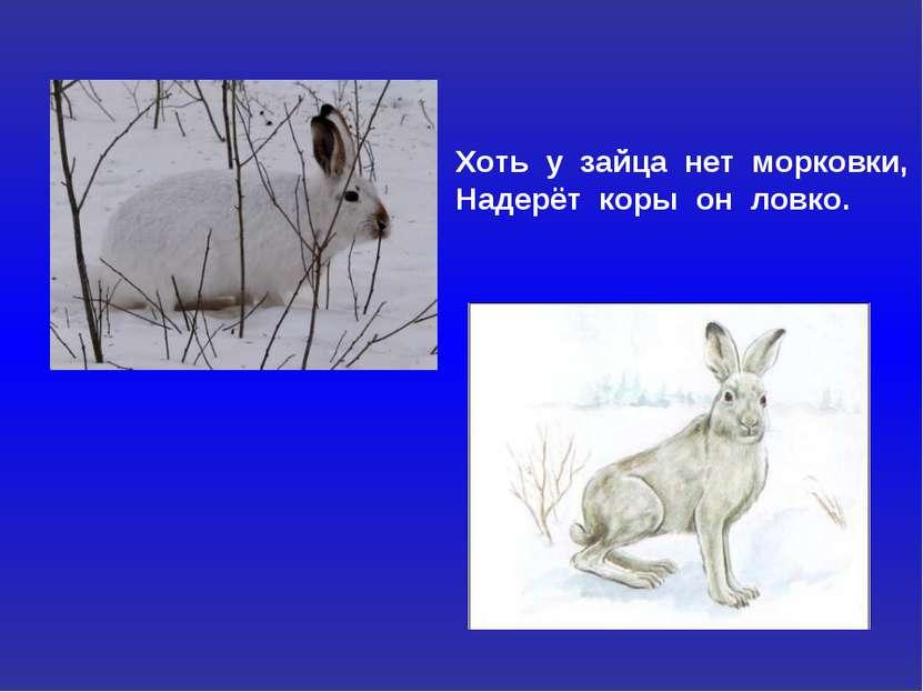 Хоть у зайца нет морковки, Надерёт коры он ловко.