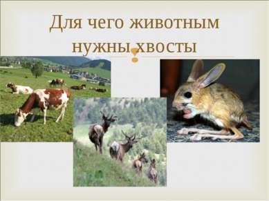 Для чего животным нужны хвосты