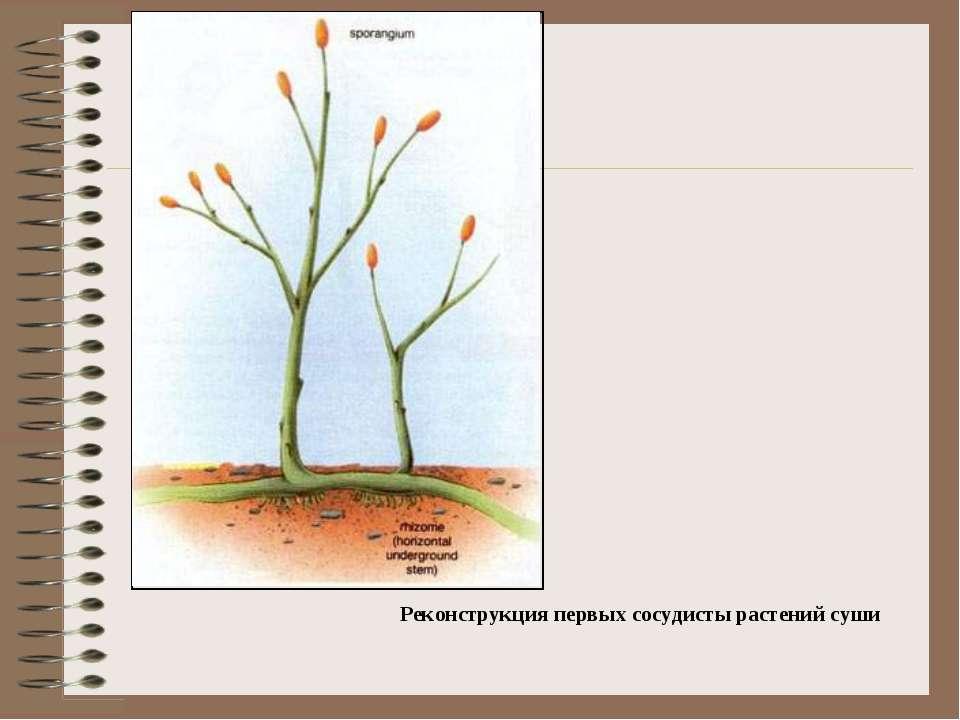 Реконструкция первых сосудисты растений суши