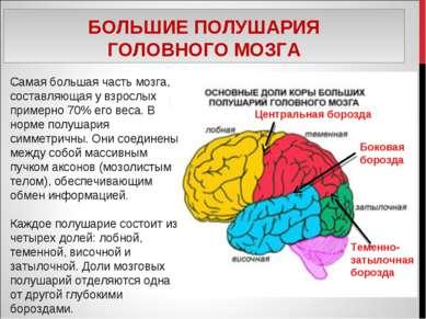 БОЛЬШИЕ ПОЛУШАРИЯ ГОЛОВНОГО МОЗГА . Самая большая часть мозга, составляющая у...