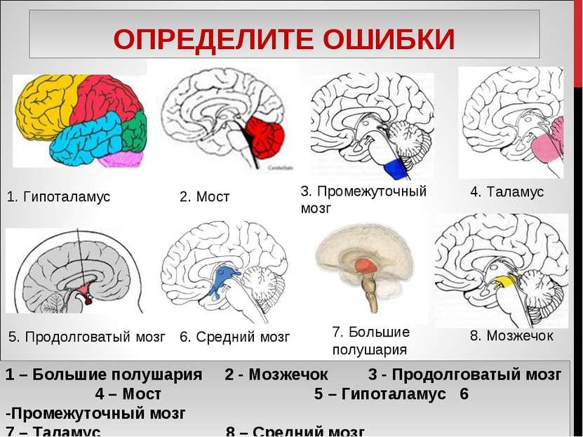 ОПРЕДЕЛИТЕ ОШИБКИ 1. Гипоталамус 2. Мост 3. Промежуточный мозг 5. Продолговат...