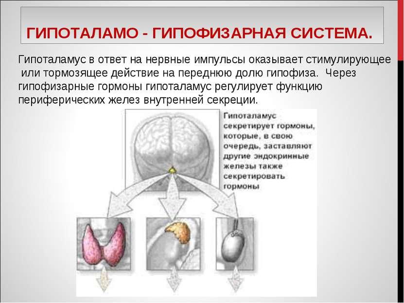 ГИПОТАЛАМО - ГИПОФИЗАРНАЯ СИСТЕМА. Гипоталамус в ответ на нервные импульсы ок...