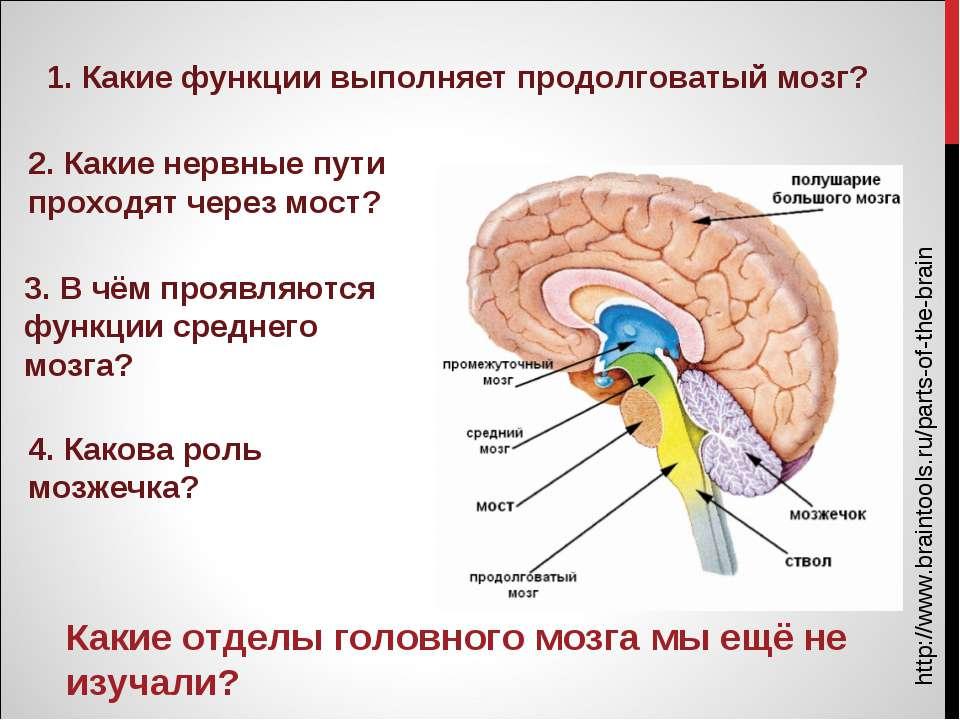 http://www.braintools.ru/parts-of-the-brain Какие отделы головного мозга мы е...