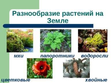 Разнообразие растений на Земле мхи водоросли папоротники цветковые хвойные