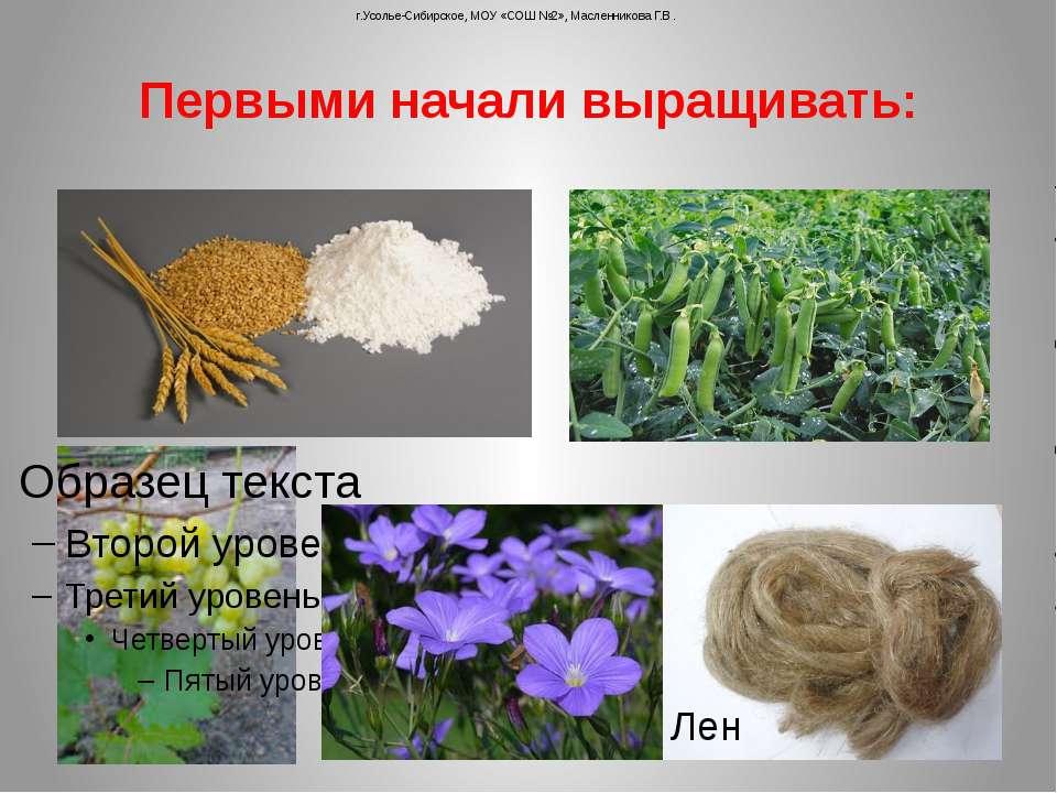 Первыми начали выращивать: г.Усолье-Сибирское, МОУ «СОШ №2», Масленникова Г.В...