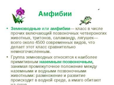 Амфибии Земноводные или амфибии— класс в числе прочих включающий позвоночных ...