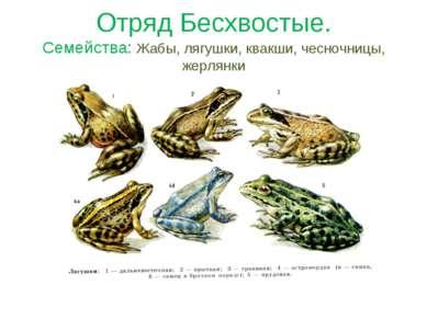 Отряд Бесхвостые. Семейства: Жабы, лягушки, квакши, чесночницы, жерлянки